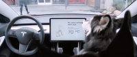 "Tesla Announces Upcoming ""Dog Mode"""