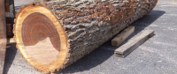 Michelin to Develop Wooden Tires as a Norm