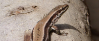 Lizards are Delaying Tesla's Work on a Germany-Based Factory