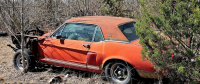 Little Red, the Extremely Rare 1967 Shelby Prototype Found in Texas Field